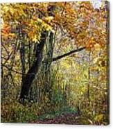 The Y Tree Canvas Print
