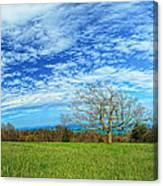 The Zen Meadow Canvas Print