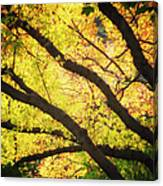 Then Autumn Arrives 03 Canvas Print