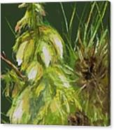 Theres A Yucca In My Yard Canvas Print