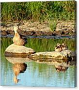 These Ducks Rock Canvas Print