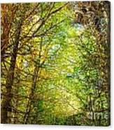 Thick Forest Hdr Canvas Print