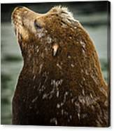 Things Are Looking Up-sealion Canvas Print