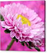 Think In Pink Canvas Print