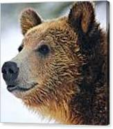 Thinking Bear Canvas Print