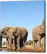 Thirsty Elephant Herd Canvas Print