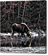 Thirsty Moose Impressionistic Digital Painting Canvas Print