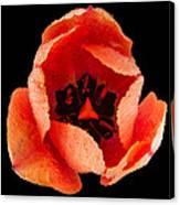 This Dordogne Tulip Canvas Print