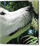This Flower Smell Good Canvas Print