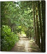 This Is The Way Walk In It Canvas Print