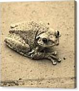 This Old Frog Canvas Print