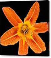 This Orange Lily Canvas Print