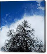 #thisparticulartree Canvas Print