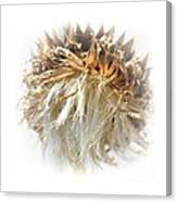 Thistle Abstract 14-1 Canvas Print