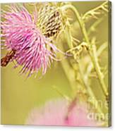 Thistle And Friend Canvas Print