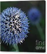Thistle Bloom 2 Canvas Print