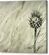 Thistle - Dreamers Garden Series Canvas Print
