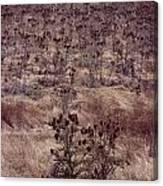 Thistle Field Canvas Print