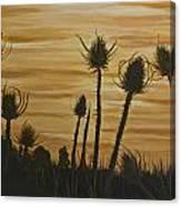 Thistles At Sunset Canvas Print