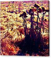 Thistles In A Summer Field Canvas Print