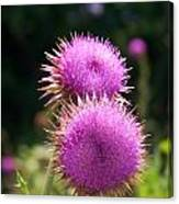 Thistles In Love Canvas Print