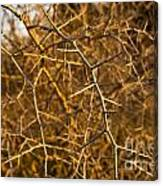 Thorn Bush Canvas Print