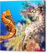 Thorny Seahorse Canvas Print