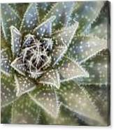 Thorny Succulent Canvas Print