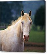 Thoroughbred Mare Canvas Print