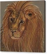 Thoughtful Lion 2 Canvas Print