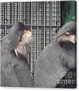 Thoughtful Monkeys Canvas Print