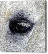 Thought's Canvas Print