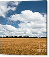 Thoughts Of A Wheatfield Canvas Print