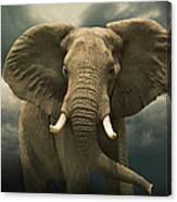 Threatening African Elephant Under Canvas Print