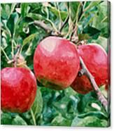 Three Apples On Tree Canvas Print