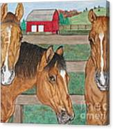 Three Beautiful Horses Canvas Print