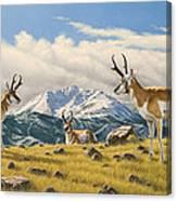 Three Bucks On The Ridge Canvas Print