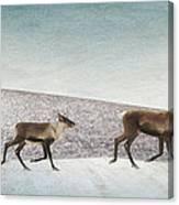 Three Caribous Canvas Print