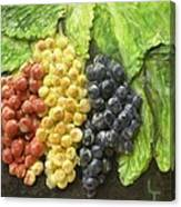 Three Colors Of Grapes Canvas Print