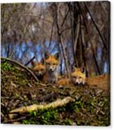 Three Cute Kit Foxes At Attention Canvas Print