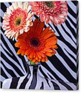 Three Daises In Striped Vase Canvas Print