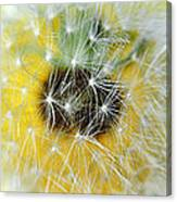 Three Dandelions In A Line Canvas Print