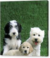 Three Diffferent Puppies Canvas Print