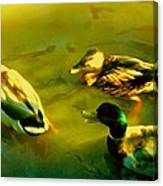 Three Ducks On Golden Pond Canvas Print