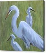 Three Egrets  Canvas Print