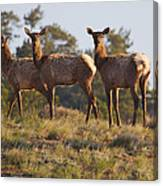 Three Elk Canvas Print