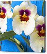 Three Exotic Orchids Canvas Print