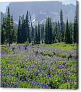 105417-three Fingered Jack And Wildflowers Canvas Print