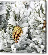 Three Frosty Cones Canvas Print