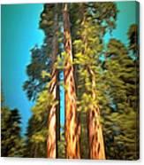 Three Giant Sequoias Digital Canvas Print